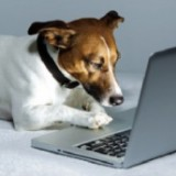Un nouvel anti-stress en entreprise : le chien !